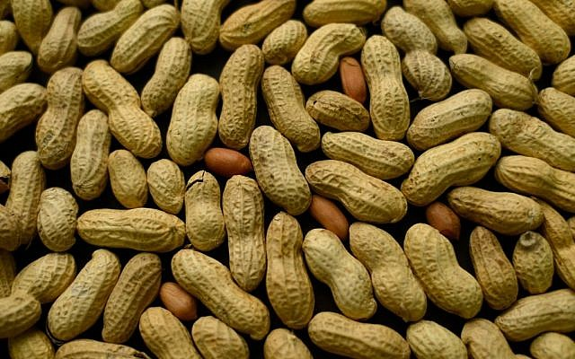 An arrangement of peanuts in New York. For years, parents of babies who seem likely to develop a peanut allergy have gone to extremes to keep them away from peanut-based foods. Now, a major study suggests that is exactly the wrong thing to do. (photo credit: AP Photo/Patrick Sison)