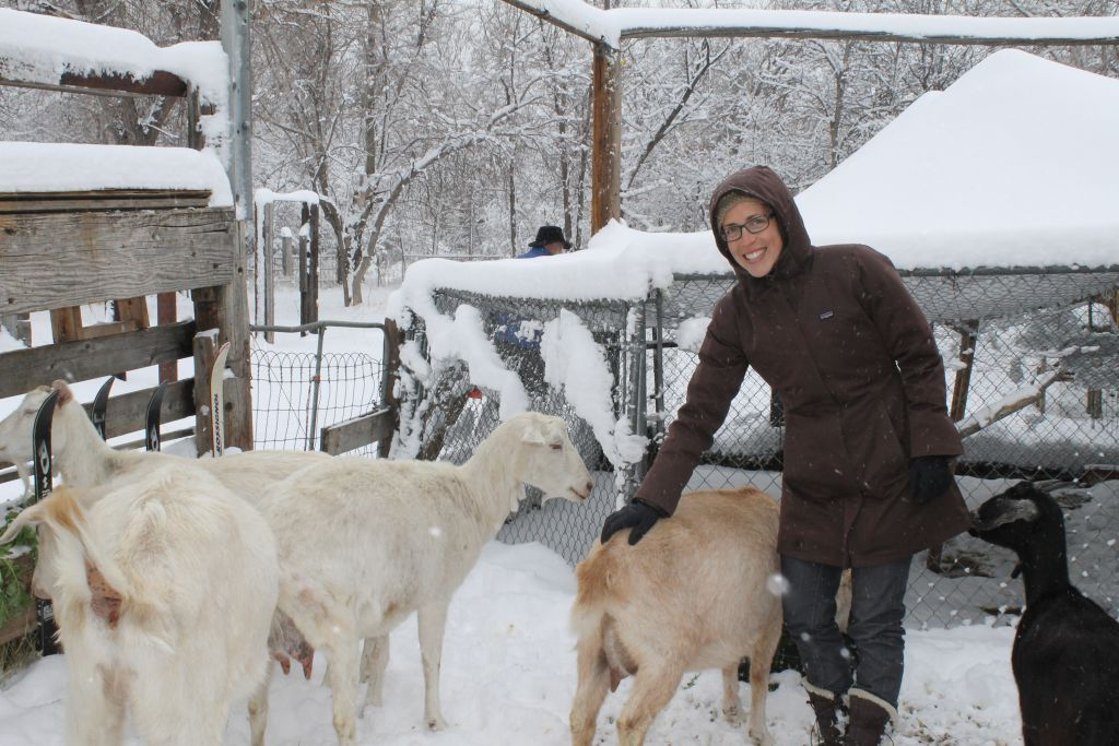 Becca Weaver, farm and sustainability director for Boulder's JCC, says that getting out and spending an hour or so milking the goats at the JCC's co-op is great therapy for the average person. (Uriel Heilman/JTA)