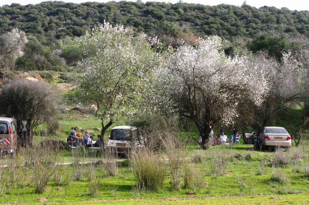 Almond trees blossom at Beit Jamal (photo credit: Shmuel Bar-Am)