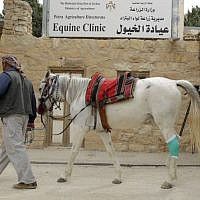 A man visits an equine clinic in the ancient city of Petra in Jordan on March 25, 2015. Four Paws and the Jordanian Princess Alia Foundation (PAF) work for the improvement of the health and working conditions of horses and donkeys in Petra, providing veterinary treatment and training for the owners.(Photo credit: AFP/ KHALIL MAZRAAWI)