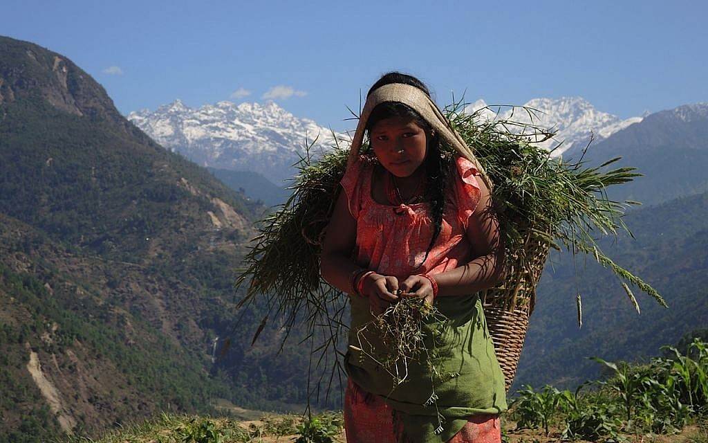 Villagers are subsistence farmers, and most barely make a living. The Nepali earthquake killed a large amount of livestock, destroying livelihoods as well as lives. Here, a young girl brings feed for her family's remaining goats with the Himalayan range of Lakpa Dorje, on the border with Tibet, behind her. May 2015. (photo credit: Melanie Lidman / Times of Israel)