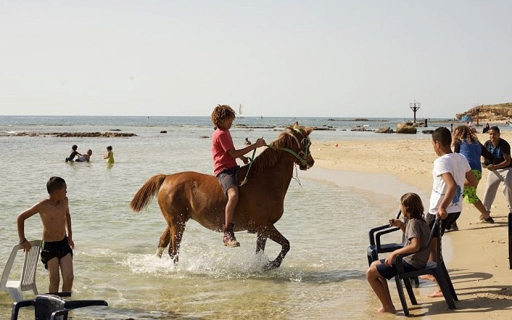 Horses are a common sight in Jisr az-Zarqa. (Eliyahu Kamisher)