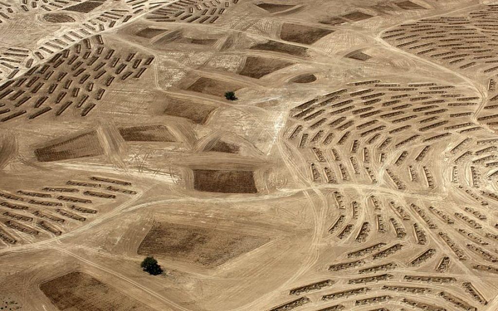 "Sheikh, Fazal. From the Desert Bloom series, 10/9/2011. Location Information: Latitude: 31°21'7""N / Longitude: 34°46'27""E. Copyright Fazal Sheikh."