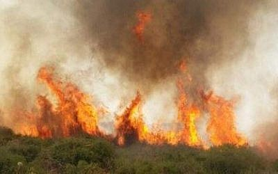A brush fire near Beit Shemesh (Courtesy Fire and Rescue Authority)