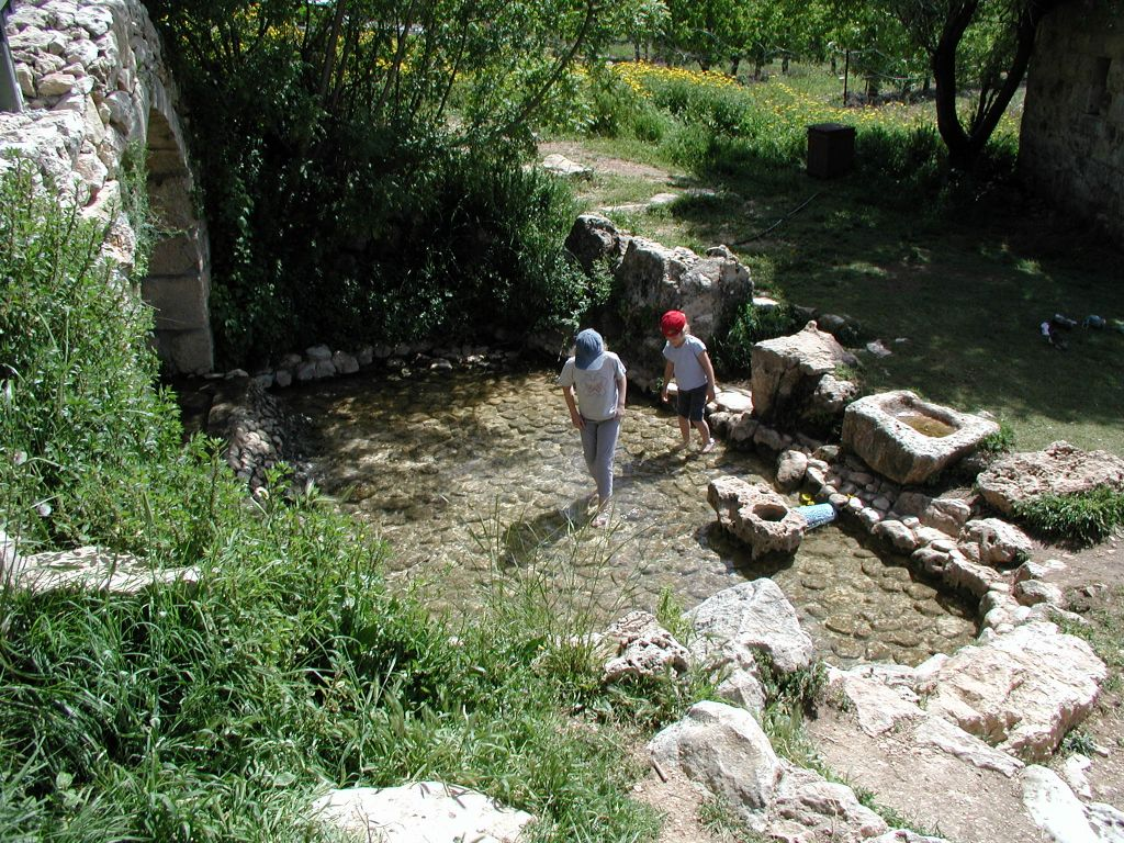 Treading water in the Ein Tzuba spring (photo credit: Shmuel Bar-Am)