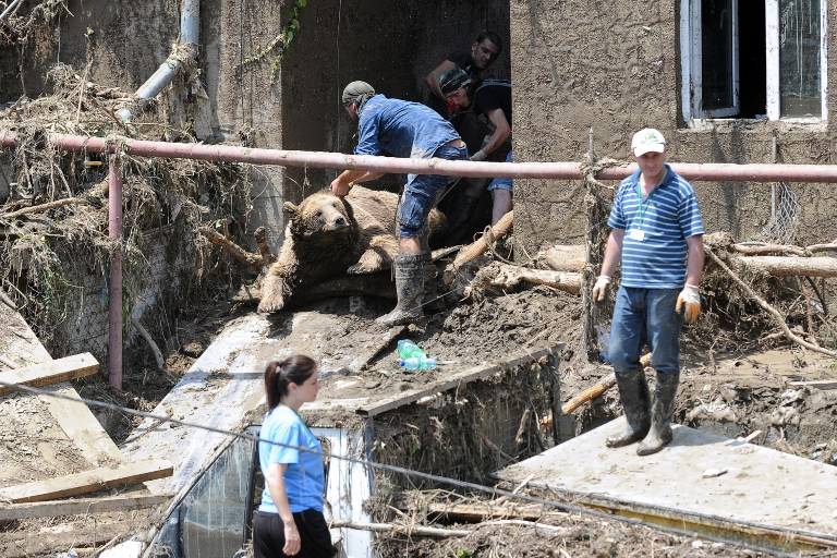 Workers pull the body of a bear out of a building at a flooded zoo in the Georgian capital Tbilisi on June 15, 2015. (Vano Shlamov/AFP)
