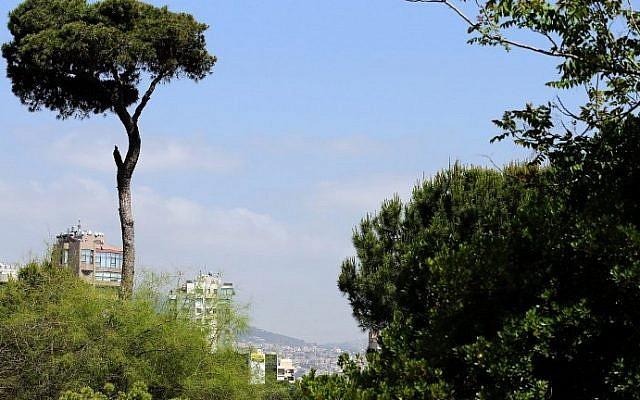 View of the forest in the Lebanese capital, Beirut, May 21, 2015 (AFP / JOSEPH EID)