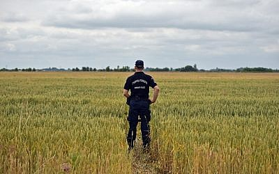 Serbian border police officer inspects a path trough a wheat field near the Hungarian border near the northern Serbian city of Subotica on June 16, 2015.(AFP/ANDREJ ISAKOVIC)