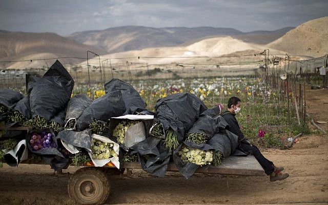 Illustrative; In this photo from January 9, 2014, a Thai worker sits in a back of a truck loaded with flowers in the fields of the West Bank Jordan Valley Jewish settlement of Petsael. (AP/Oded Balilty)