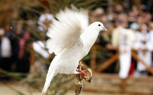 A dove at the Qasr-al-Yahud baptism site on the Jordan River on January 18, 2010. ( Abir Sultan/Flash 90)
