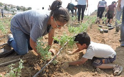 One of the nearly 100 volunteers, mostly Jewish-Americans in their 20s, who helped plant gardens and pave a road in the Palestinian villages of the South Hebron Hills. (Ben Sales)