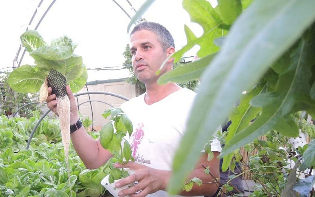 Mendi Falk demonstrates how plants grow in hydroponic systems on the roof of Dizengoff Center. (Melanie Lidman/Times of Israel)