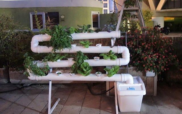 A hydroponics system built in pipes, with a pump at the lower right corner constantly circulating the fertilizer-water solution. Individuals can design and buy their own units. (Melanie Lidman/Times of Israel)