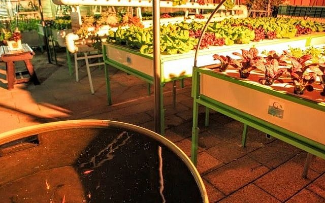 Green in the City has about 100 square meters for their garden, but hopes to expand to 500 square meters so the garden can be financially sustainable. (photo courtesy Green in the City)