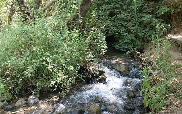 The Snir stream. (Shmuel Bar-Am)