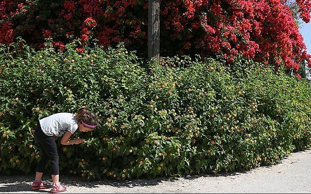 Illustrative photo of a girl smelling flowers in a garden in northern Israel, in 2013. (Flash90)