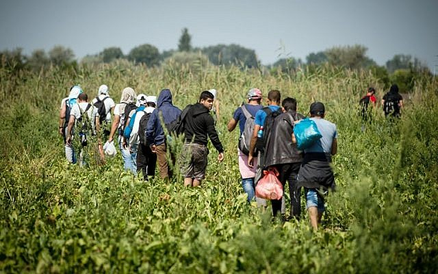 Migrants and refugees walk trough a field towards the Hungarian border near the northern Serbian town of Horgos on August 27, 2015. (AFP/ANDREJ ISAKOVIC)