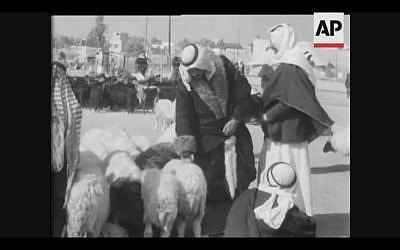 Bedouin shop for sheep during market day in Beersheba, 1957 (Screenshot of newsreel footage from YouTube)