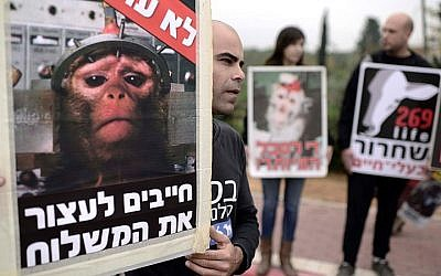 FILE: Activists of a Israeli animal rights organization hold placards as they protest against the intent to ship out few hundreds monkeys from the monkey farm for a medical research abroad, Mazor, Israel on December 19, 2014. (Tomer Neuberg/Flash90)