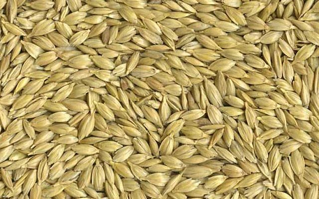 Emmer wheat kernels (Courtesy)