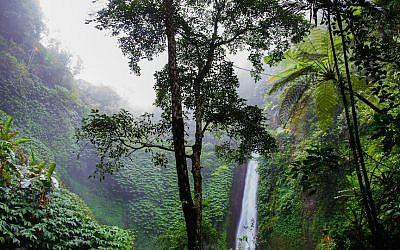 Brazilian rain forest (Pexels)