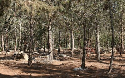 Ben Shemen Forest. (Flickr/StateofIsrael/CC BY-SA 2.0)