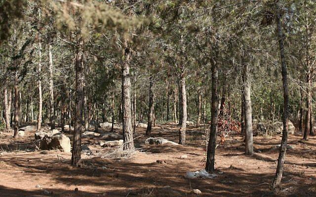 Ben Shemen Forest. (Flickr/StateofIsrael/CC BY-SA 2.0)