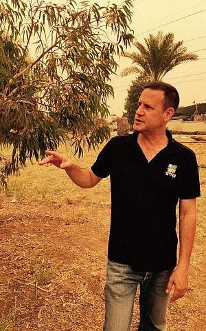 Aviv Eisenband, a KKL treekeeper, says flowering trees like the eucalyptus help stave off the problematic effects of urbanization (Jessica Steinberg/Times of Israel)