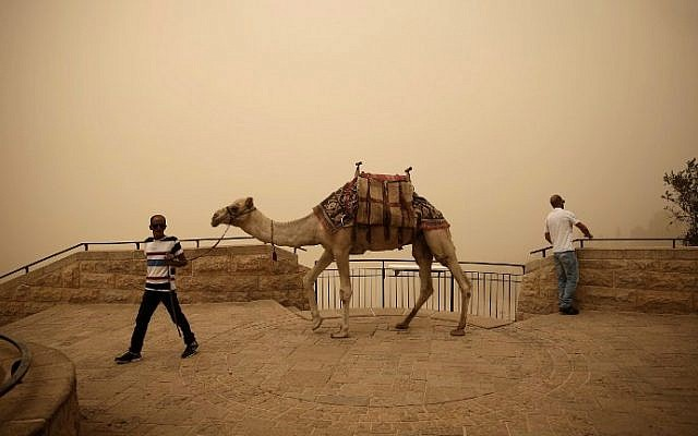 A Palestinian man walks with a camel on the Mount of Olives in Jerusalem, on September 8, 2015 in Jerusalem. (AFP/THOMAS COEX)