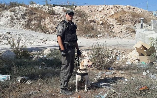 A Border Police dog named 'Taj,' pictured here, discovered an explosive device at a checkpoint near Isawiya in East Jerusalem on October 16, 2015. (Border Police)