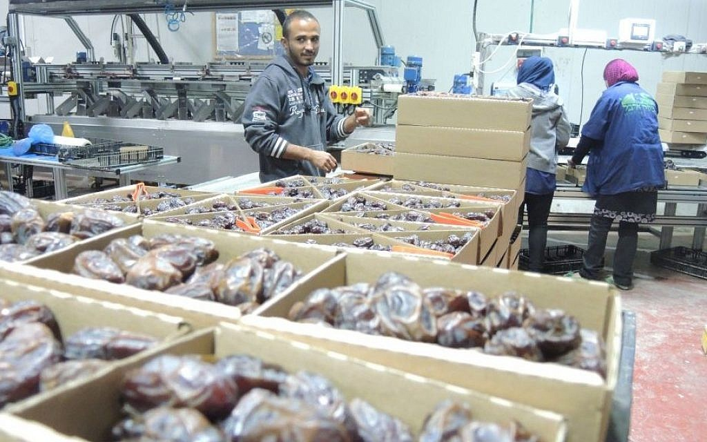 Palestinian workers on November 11, 2015, at a date packaging factory in the Jordan Valley in the West Bank. This produce will be labeled if exported to the EU as 'Product of the West Bank (Israeli settlement' (Melanie Lidman/Times of Israel)