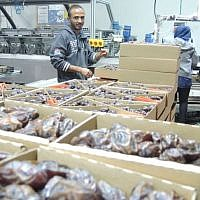 Palestinian workers on November 11, 2015, at a date packaging factory in the Jordan Valley in the West Bank. This produce will be labeled if exported to the EU as Product of the West Bank (Israeli settlement (Melanie Lidman/Times of Israel)