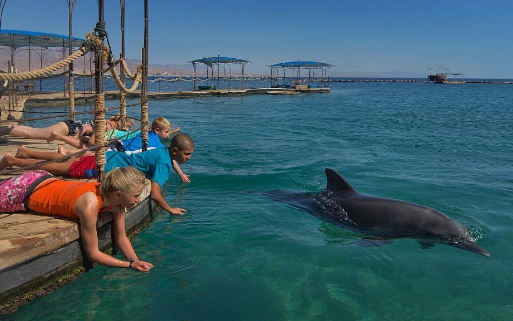 Eilat's Dolphin Reef (Dafna Tal/ www.goisrael.com)