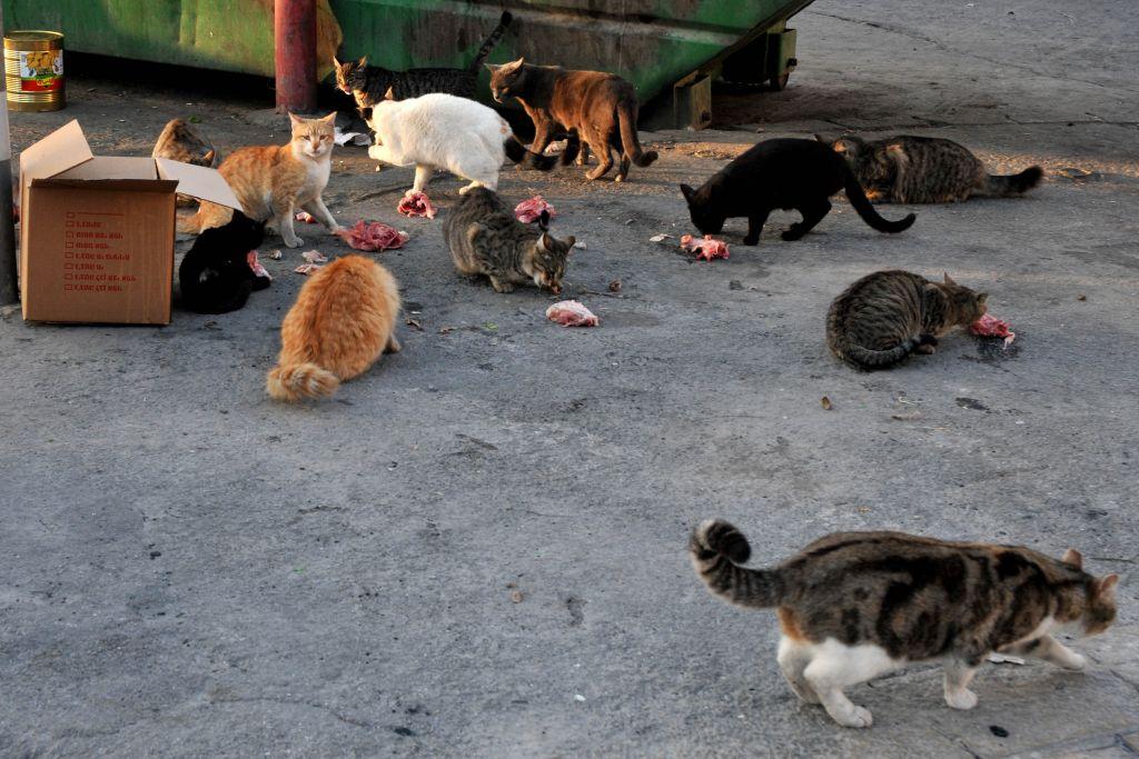 Cat Street Review