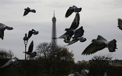 Pigeons fly at the Tuileries gardens, with the Eiffel Tower in background, in Paris, Saturday, November 14, 2015 (AP Photo/Amr Nabil)