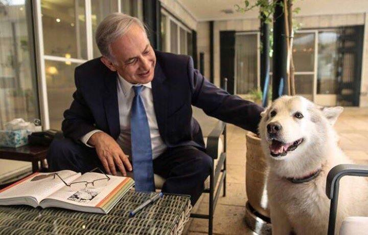 Adopt A Dog Kerry