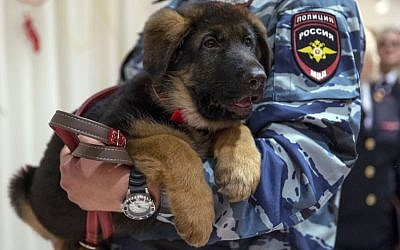 A Russian police officer holds a puppy, named Dobrynya, before presenting it to French police in the French Embassy in Moscow, Russia, December 7, 2015. (AP/Pavel Golovkin)