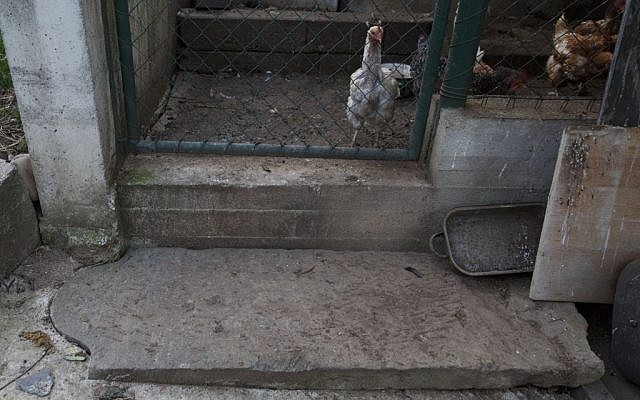 In this picture taken on Monday Oct. 26, 2015, a tombstone lays as a doorstep to a hen house near Prostejov, Czech Republic. (AP Photo/Petr Josek)