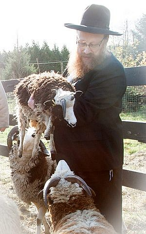 Rabbi Falik Schtroks, the Chabad emissary to Vancouver, taught a class at the Lewinsky farm in October, during the week when the portion about Jacob is read from the Torah. (courtesy Gil Lewinsky)