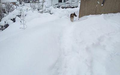 A pet German Shepherd walks in a neighborhood blanketed in snow in Edgewood, New Mexico, Sunday, December 27, 2015. (Photo by Kim Serrano via AP)
