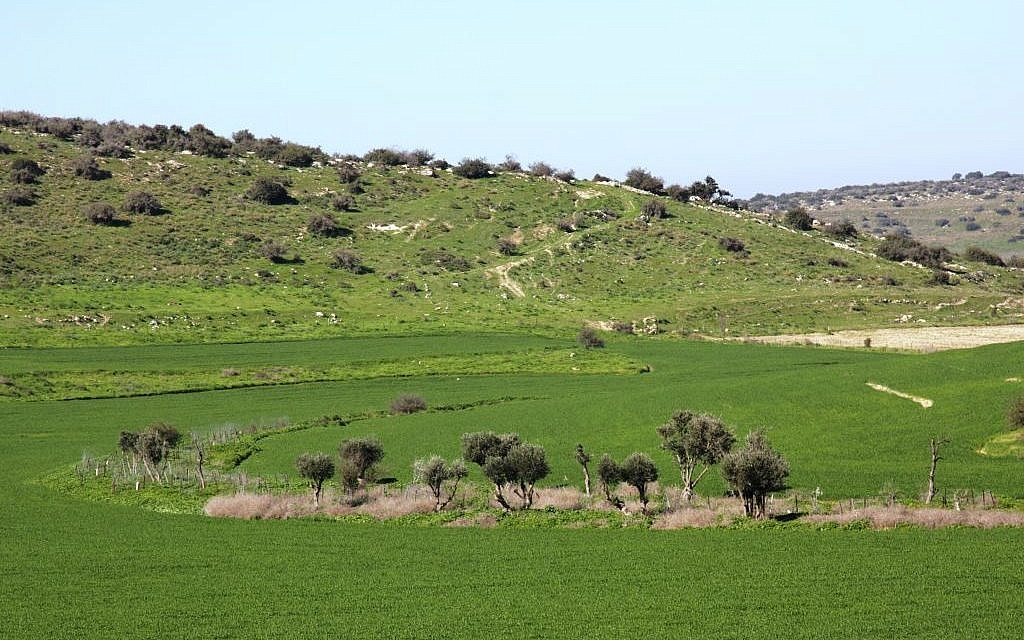 Open ground in the Amazia Forest biosphere (Shmuel Bar-Am)