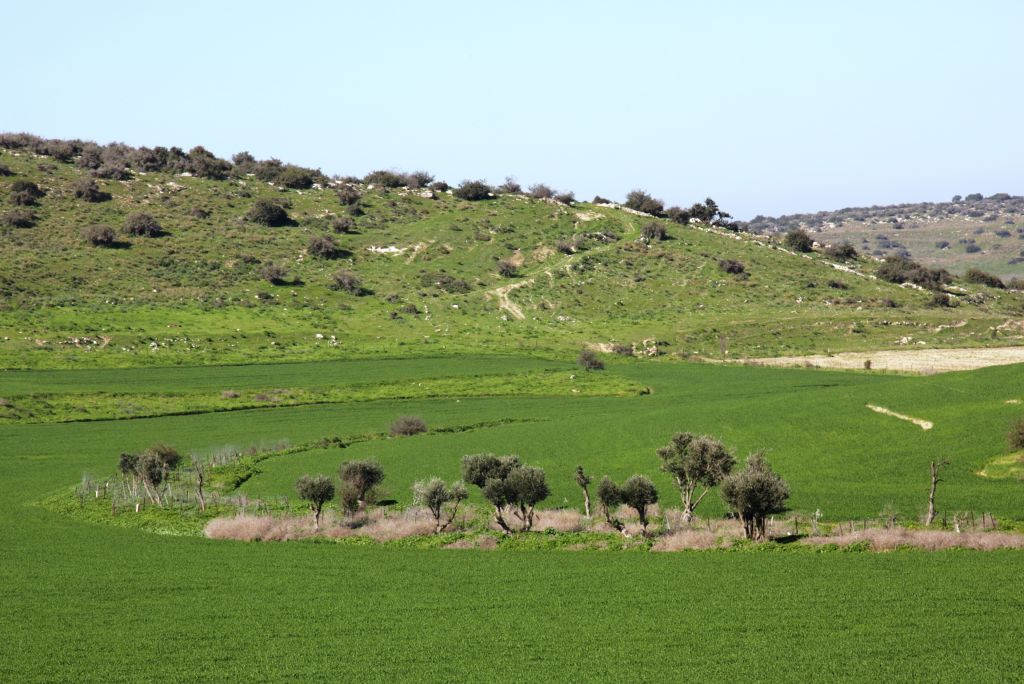 Open ground in the Amazia Forest biosphere (Shmuel Bar-Am)