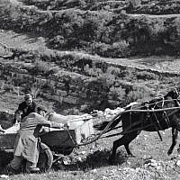 Farmers build a new settlement at Givat Yearim in 1956. (Courtesy KKL-JNF/Werner Brown)