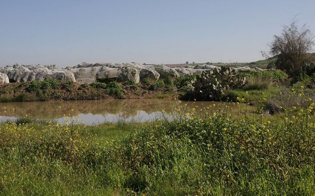 The Hodaya Puddle (Shmuel Bar-Am)