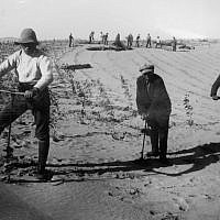 Laborers dig holes for trees in the Negev in 1930. The first KKL-JNF forestation project featured olive trees, with plans to export olive oil. (KKL-JNF/Avraham Malovsky)