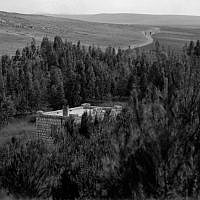 A KKL-JNF forest from 1927, with six-year-old pine trees. Planting trees was one of the first major activities of the organization, along with purchasing land. (Courtesy KKL-JNF/Avraham Malovsky)