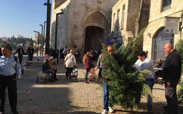 Picking Christmas trees at Jaffa Gate (Jessica Steinberg/Times of Israel)