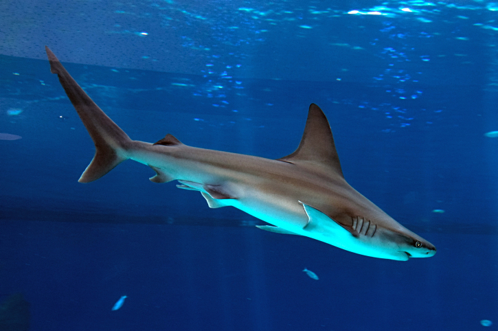 Stay away from sharks, says Israel's parks authority | The