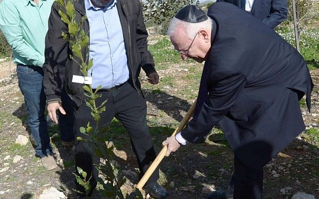 President Reuven Rivlin plants a dafna (laurel) tree during a condolence visit to the family of terror victim Dafna Meir in Otniel on January 21, 2016,  four days after she was murdered in a terror attack at her home (Photo: Mark Neyman/GPO)
