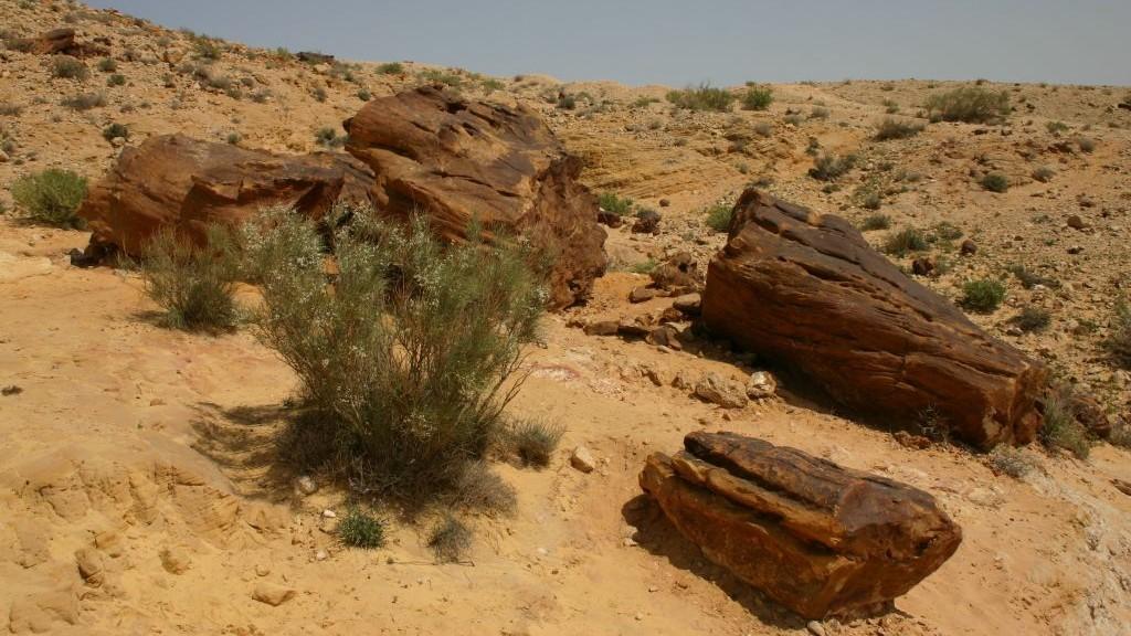 Petrified trees in the Big Crater at Miztpe Ramon (Shmuel Bar-Am)